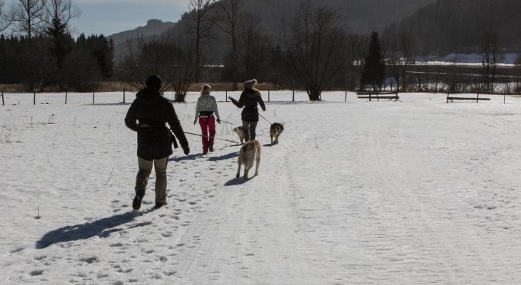 Husky Wanderung bei Husky Haberl